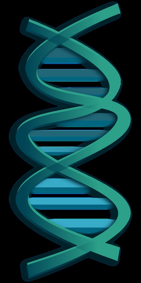 ウイルスゲノムと検索した出てきた画像