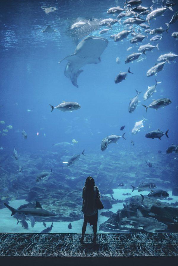 人間と魚達