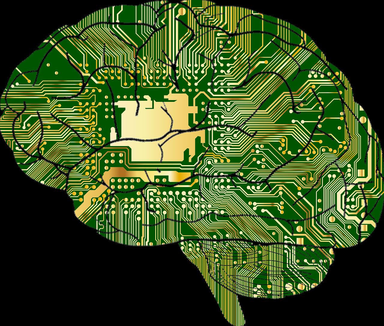 人間の脳のイメージ画像